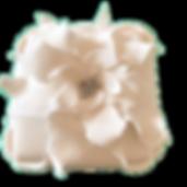 white poinsettia.png