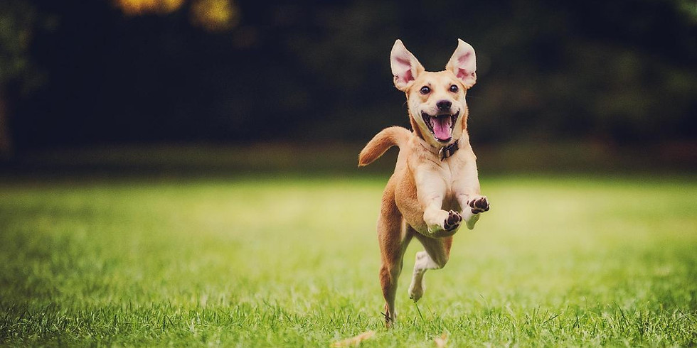 Help! My Dog has no recall!