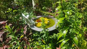 Rudbeckia floating in bird bath