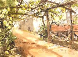 Лимонный сад, дом Розеллы