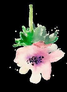 gentle pink flower.png