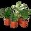 Thumbnail: Mini Tropicals Plant Bundle
