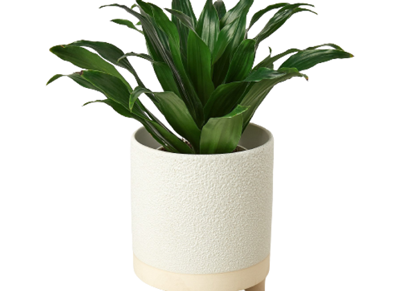 Delray Footed Planter