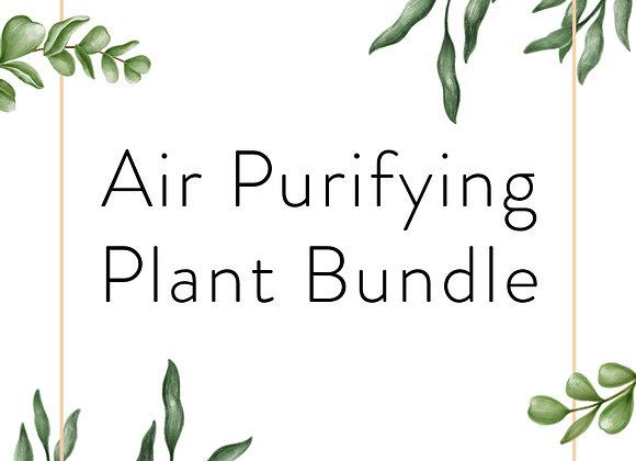 Air Purifying Plant Bundle