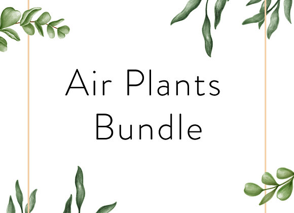 Air Plant Bundle