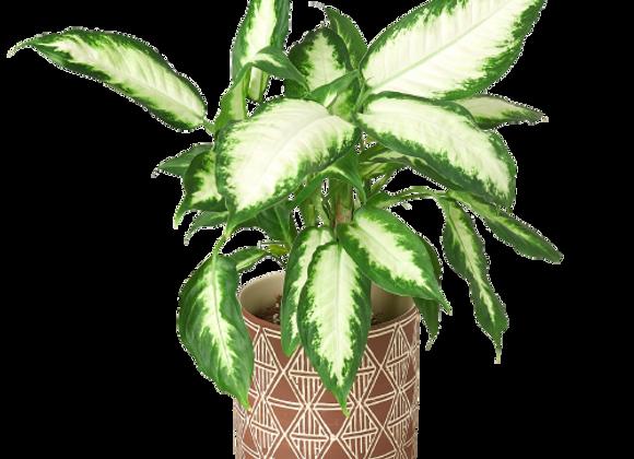 Sao Planter