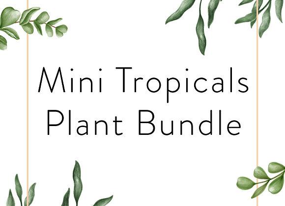 Mini Tropicals Plant Bundle