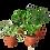 Thumbnail: Pet Friendly Plant Bundle