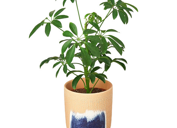 Huey Planter