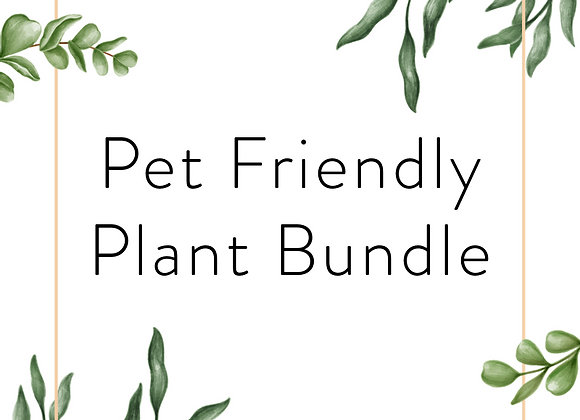 Pet Friendly Plant Bundle