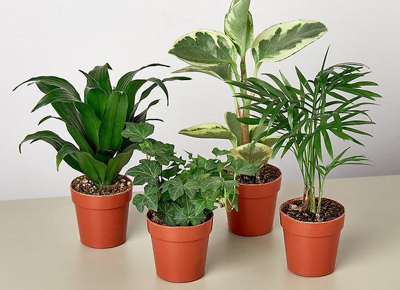 Mini Tropical Plant Bundle