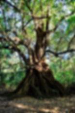 Nature walks in Tamarindo