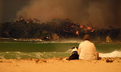 img-dog-man-malua-bay-bushfire.jpg
