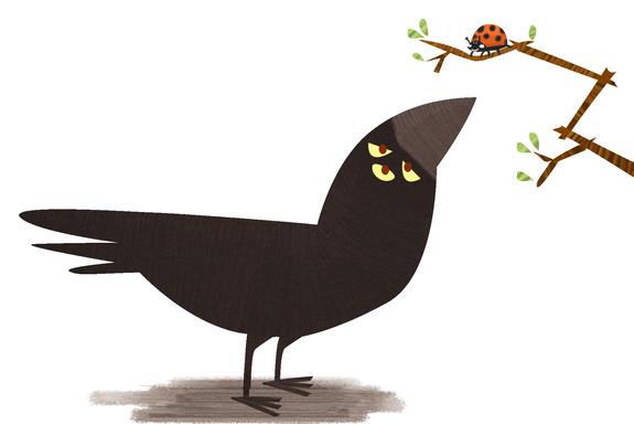 crowbug2.jpg