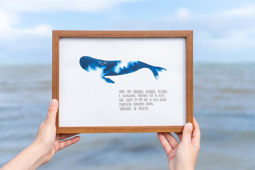 vontades de baleia