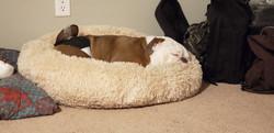 Hussle sleeping