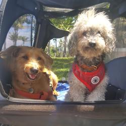 Samba & Leo on an outing