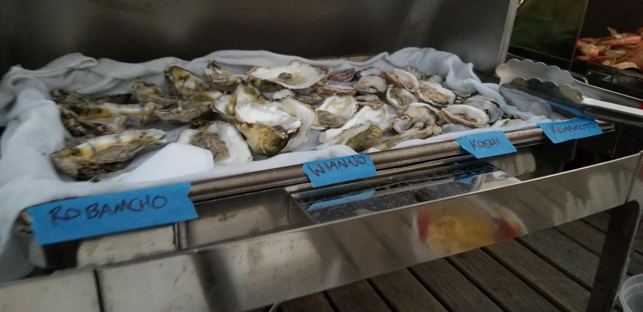 oystercatering.jpg
