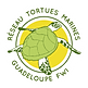 koze toti kazAnne partner for Guadeloupe turtles