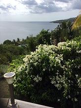 bougainvillier et autres plantes fleurs du jardin