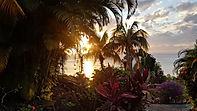 Palmiers et cocotiers dan notre jardin tropical