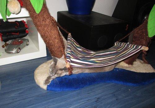 Katze Hängematte