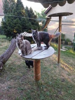 Katzenspielplatz