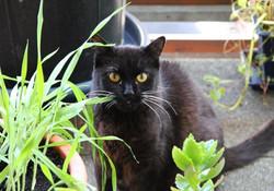 Katze Gina