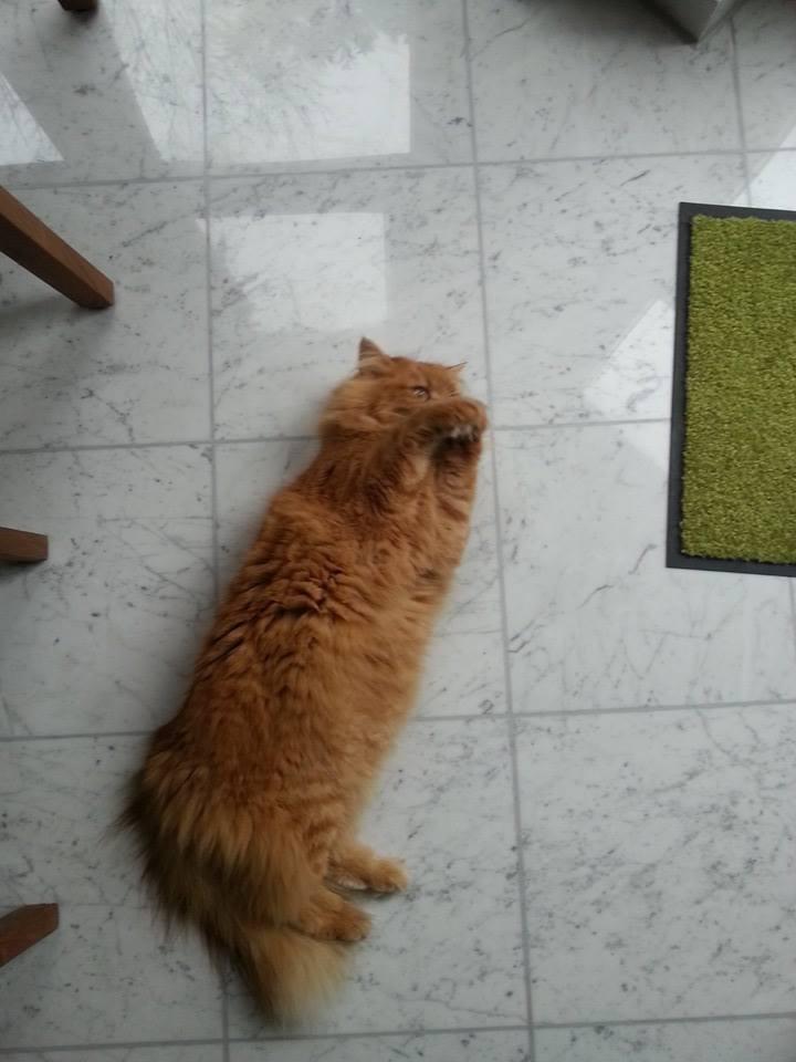 putzende Katze