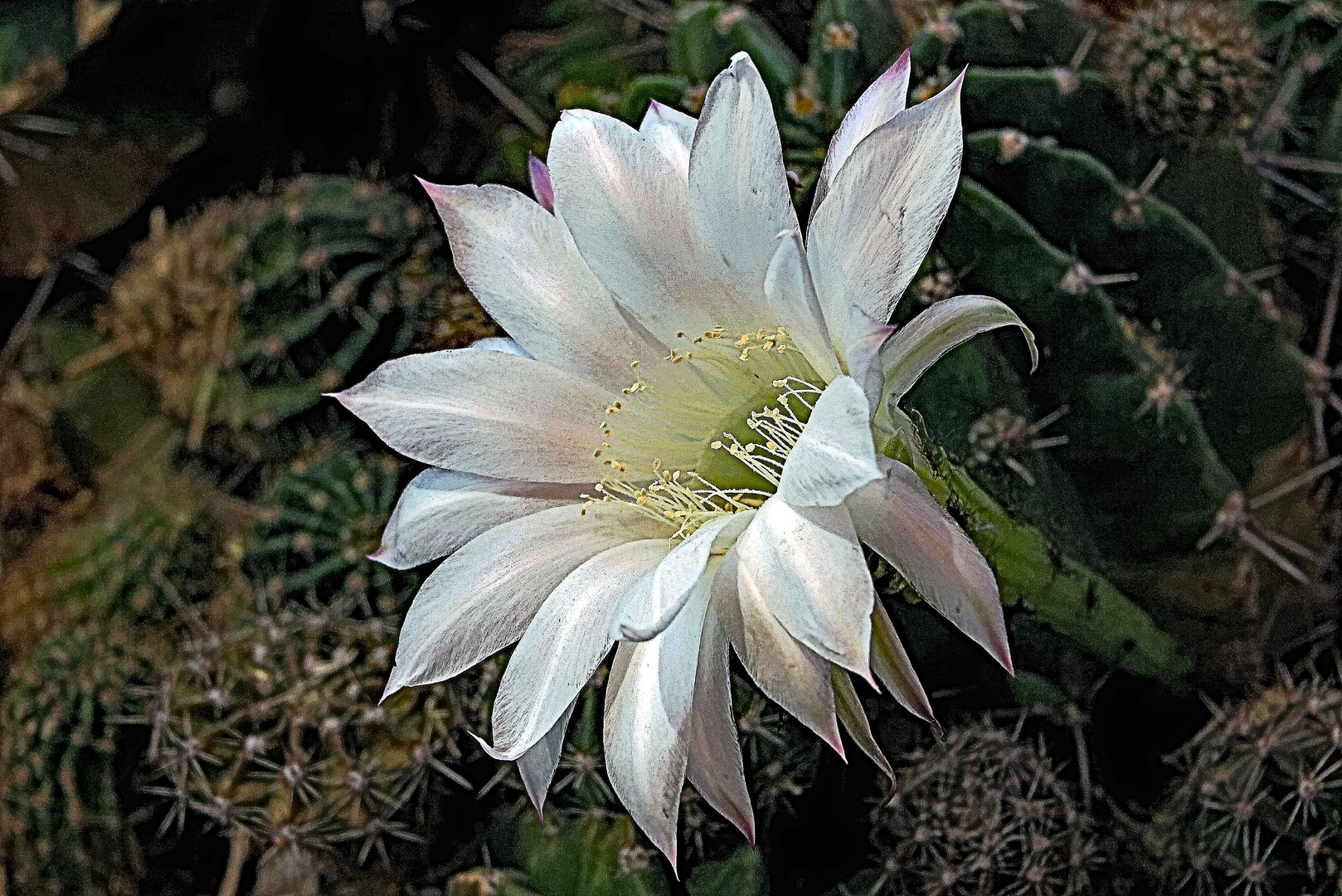 The Beauty of Cactus
