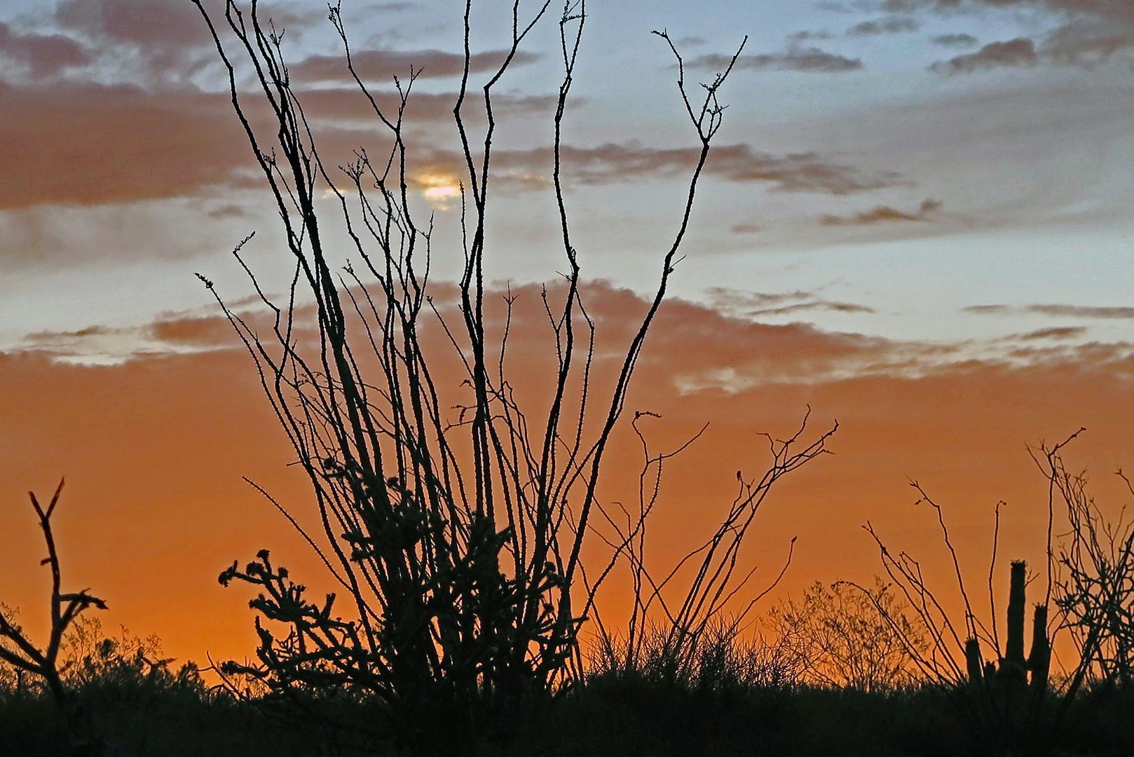 A Desert Morning