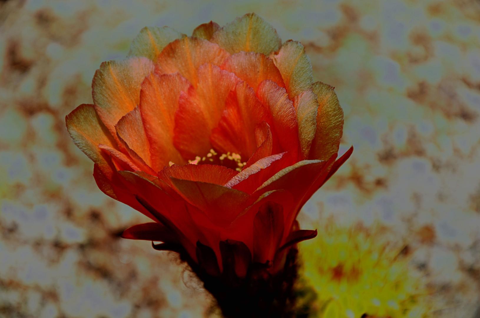 Phantom Flower