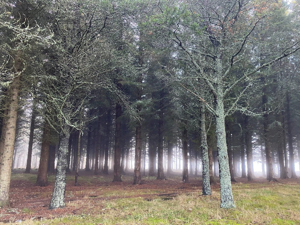 Mist and cloud seeps through trees