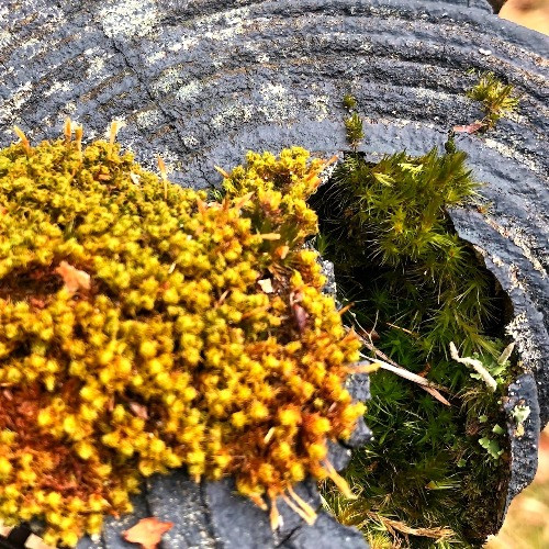 Mosses and a fencepost