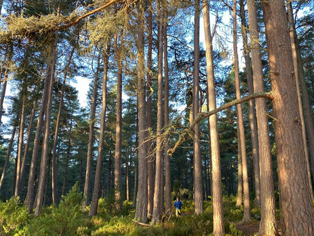 What to Expect During a Forest Bathing Session…