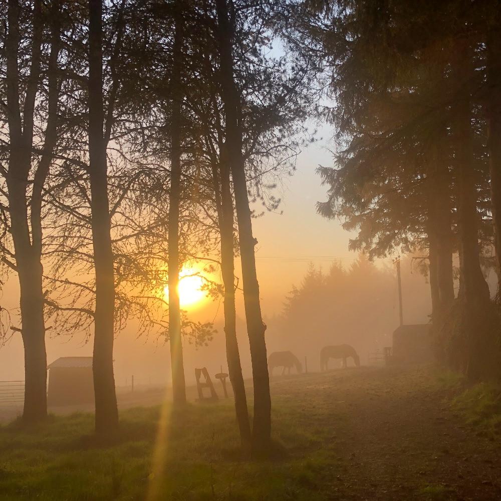 Sunrise, trees and horses