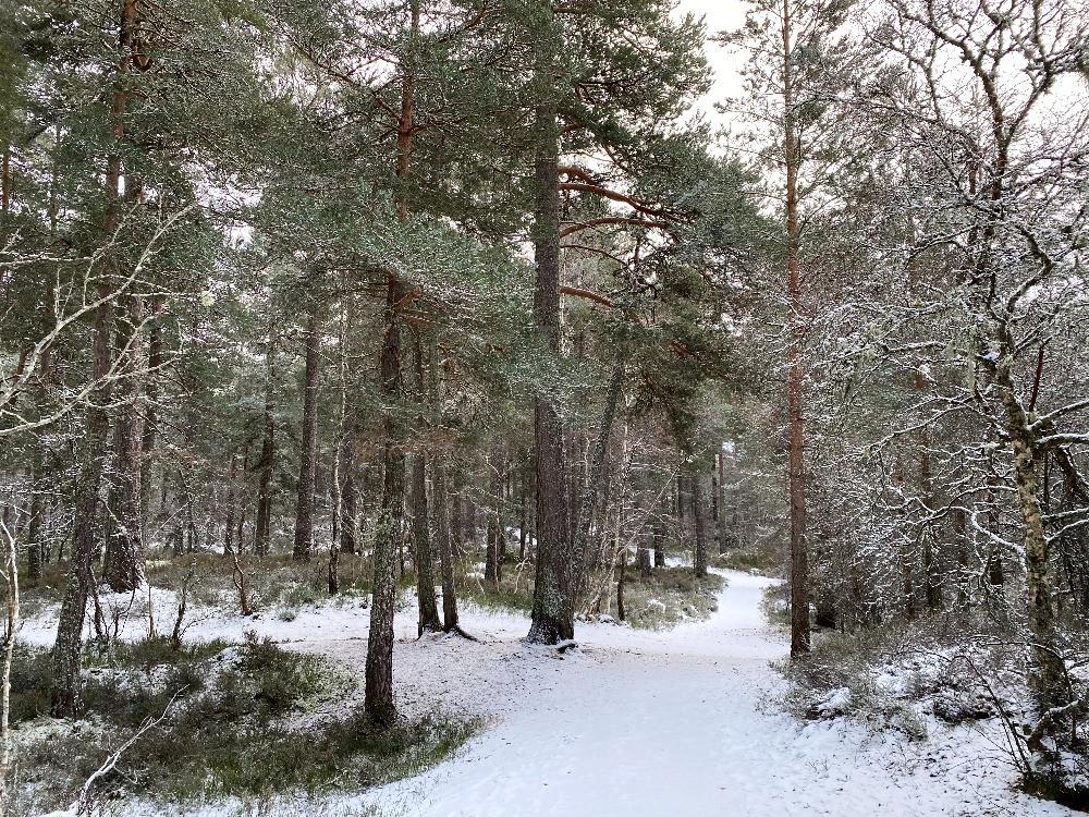 snowy footpaths in woodland