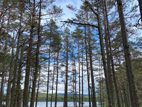 Why Forest Bathing and Me?