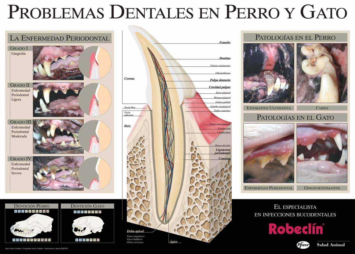 p_pfizer_odontologia
