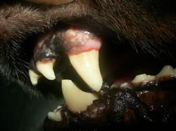 Odontologia3
