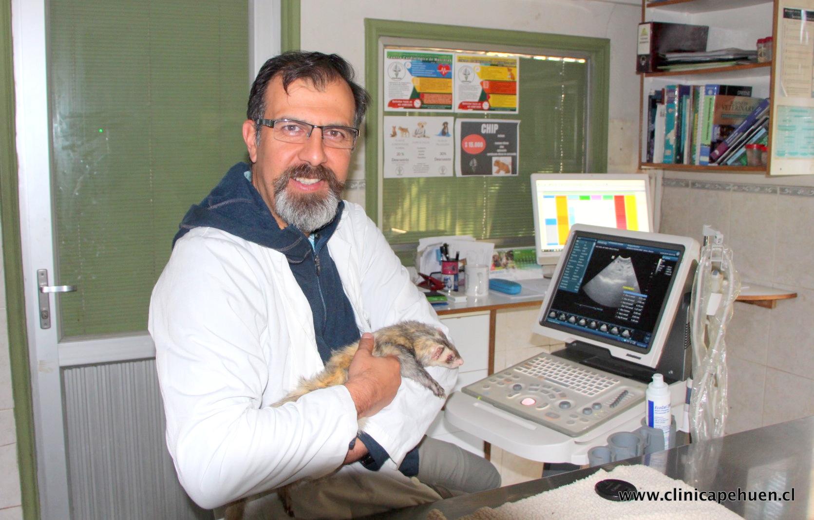 Ecografia veterinaria
