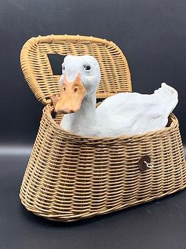 duckinbasket.jpg