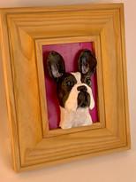 Frenchbulldog1.jpg
