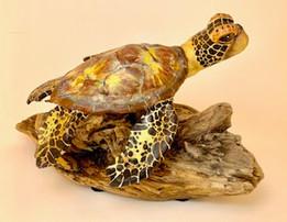 Sea Turtle#3.jpg