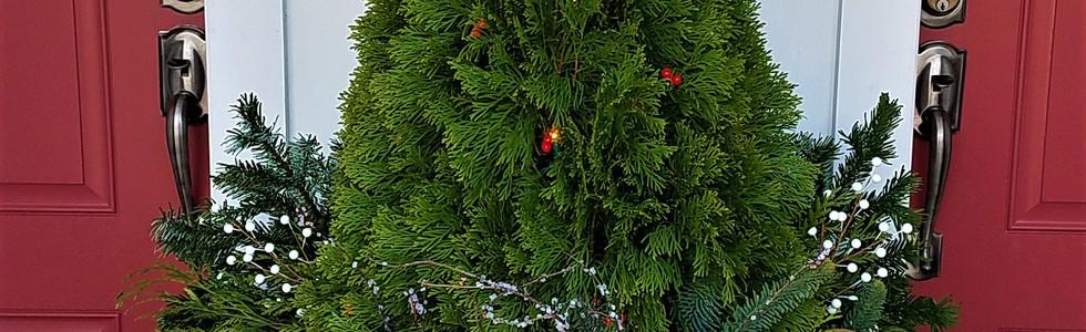 Outdoor Tree.jpg