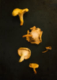 yellow-mushrooms-on-black.jpg