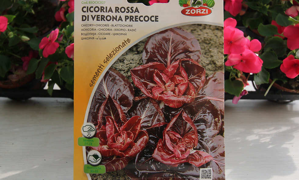 Cicoria Rossa di Verona precoce