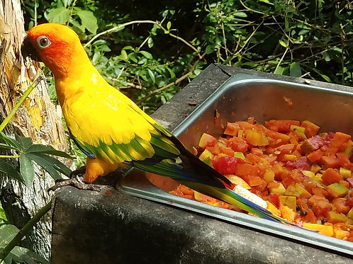 Tour of the Colombian National Aviary in Cartagena