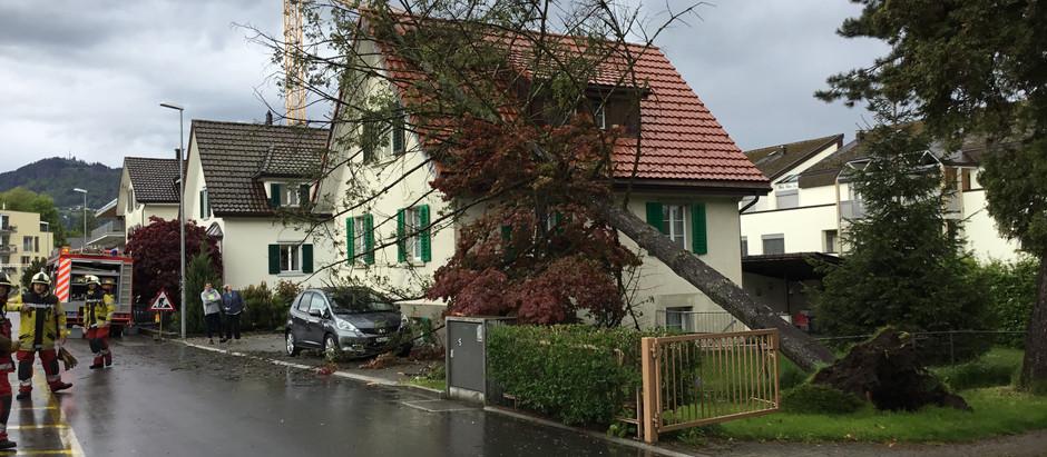 KA 1: Baum umgefallen Alpenblickstrasse