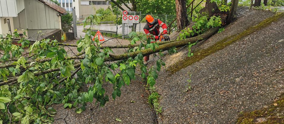 HolzGr: Baum über Strasse Haltbergstr.